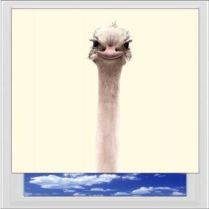 Ostrich Digitally Printed Photo Roller Blind